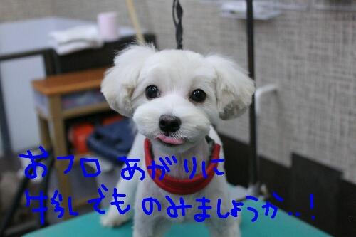 b0130018_23483913.jpg