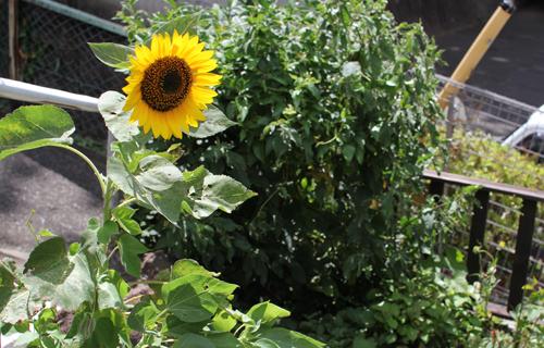花園涼菓_a0283024_22301535.jpg