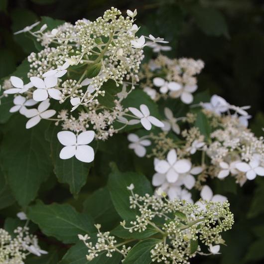 ノウゼンカズラが咲いてます_a0292194_1253473.jpg