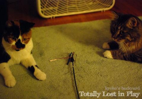 我を忘れて遊ぶ猫の行く末_b0253205_4114470.jpg