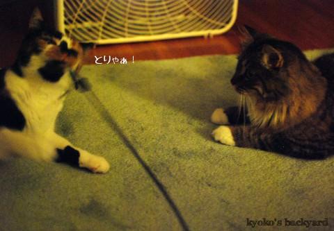 我を忘れて遊ぶ猫の行く末_b0253205_4121454.jpg
