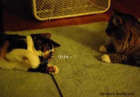 我を忘れて遊ぶ猫の行く末_b0253205_4125848.jpg