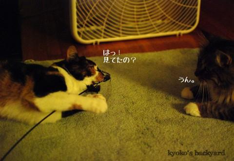 我を忘れて遊ぶ猫の行く末_b0253205_4132470.jpg