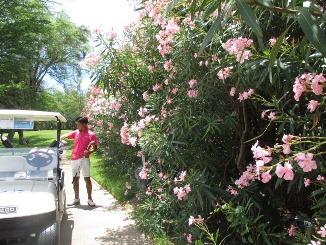 趣味の園芸?夏休みもつづく・・・。_d0091909_958961.jpg