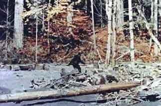 『アメリカで熊が自然な直立二足歩行し始めた!?!』 / 動画_b0003330_2246822.jpg
