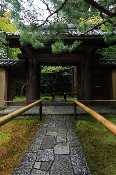 高桐院(大徳寺塔頭)_e0051888_13425655.jpg