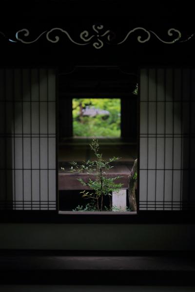 高桐院(大徳寺塔頭)_e0051888_13432614.jpg