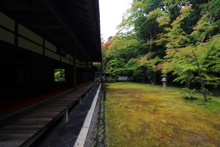 高桐院(大徳寺塔頭)_e0051888_13454078.jpg