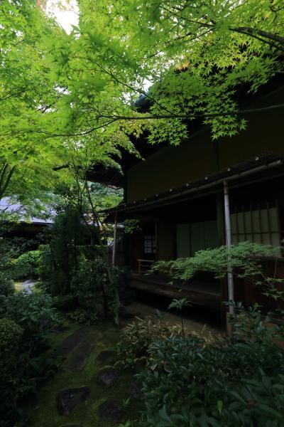 高桐院(大徳寺塔頭)_e0051888_13471060.jpg