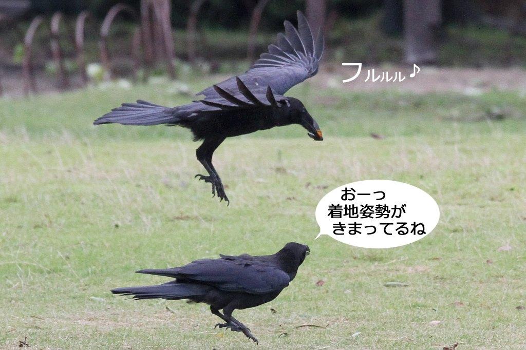 b0174191_20023339.jpg