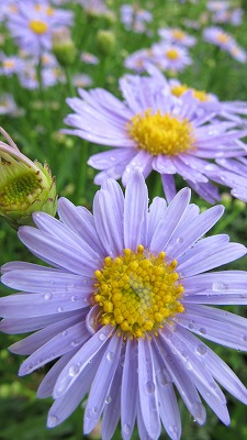 お花のズームアップ3_b0219993_1432814.jpg