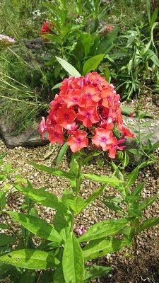 お花のズームアップ3_b0219993_144118.jpg