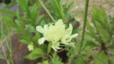 お花のズームアップ3_b0219993_1443453.jpg