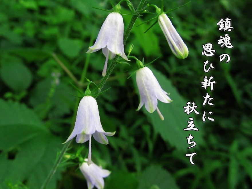 f0137096_1511418.jpg