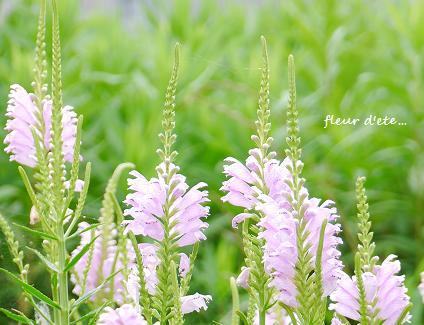 穏やかな夏の日に咲く花・・・☆_c0098807_20374381.jpg