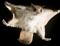 フライングヒューマノイド!?:世界中で空を自由自在に飛ぶ新人類が目撃される!?_e0171614_828325.jpg
