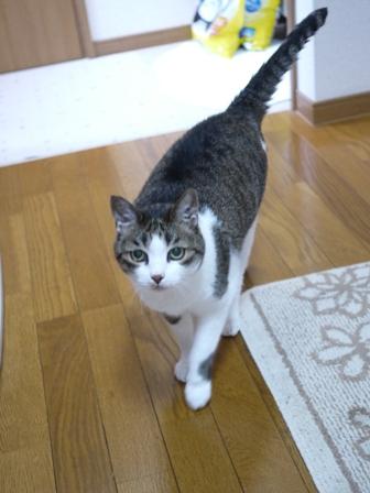猫のお友だち すずちゃん編。_a0143140_2211699.jpg
