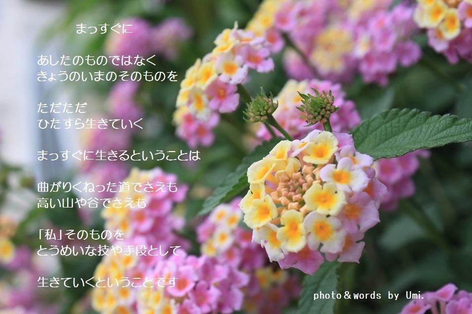 f0351844_10115127.jpg