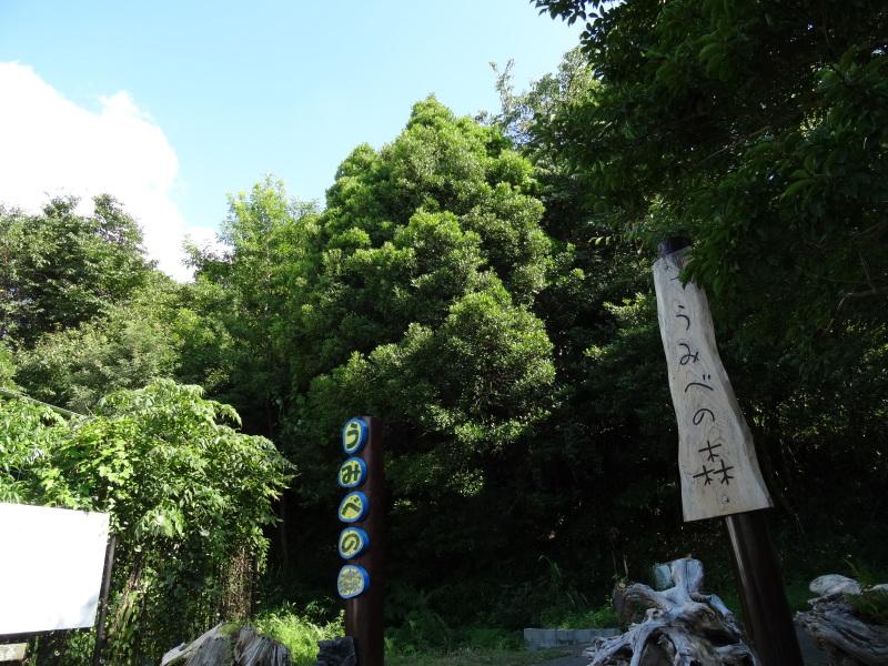 うみべの森一人作業 & カニの道の整備     by     (TATE-misaki)_c0108460_22485678.jpg