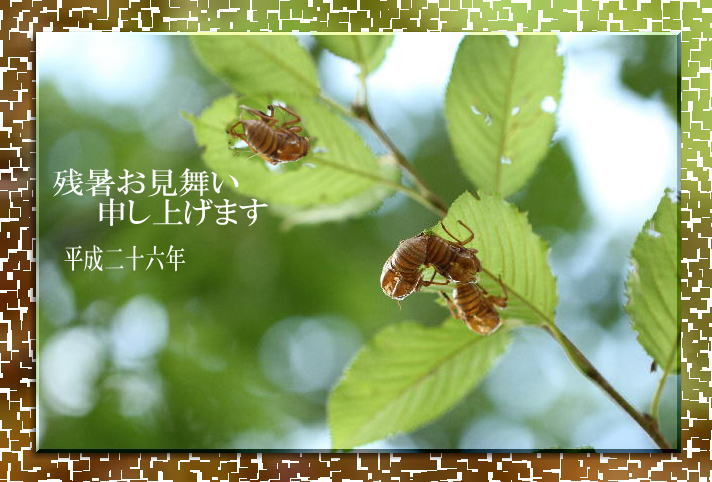 f0164592_7342328.jpg