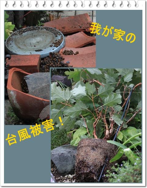 c0325701_20152786.jpg