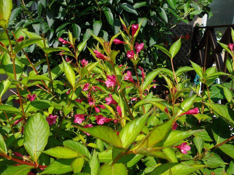 植物たちは秋めいてきています_c0025115_1915925.jpg