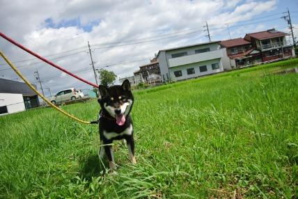 8/11 お散歩02_e0236430_1903128.jpg