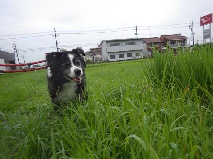 8/12 お散歩_e0236430_19241830.jpg