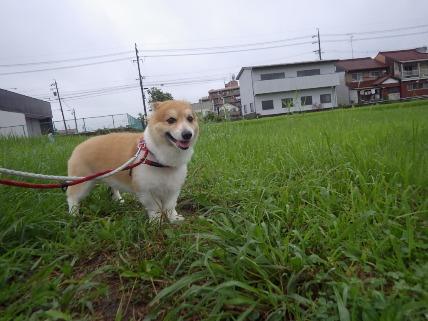 8/12 お散歩_e0236430_19241931.jpg