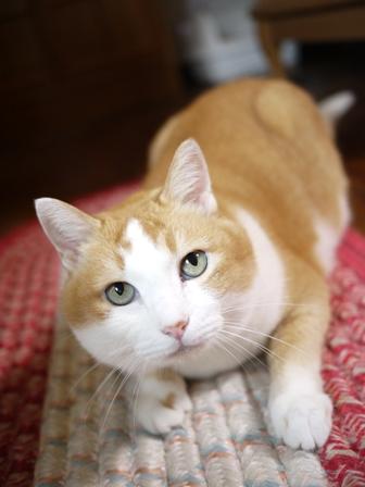 猫のお友だち ふくちゃん編。_a0143140_2113553.jpg