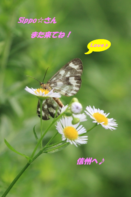 ■■ 蓼科の夏 ~5~ ■■_c0195662_21225864.jpg