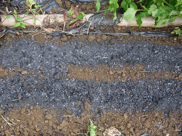 台風一過、サトイモ生き生き、ニンジンの種撒き直し_c0014967_18571520.jpg