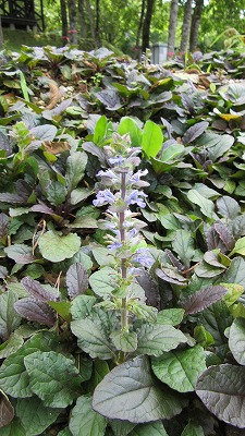 ロックガーデンの花たち22_b0219993_16392483.jpg