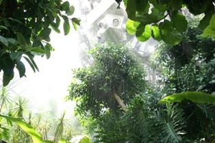 大学生が書く、大温室の大雨スコール体験!_f0203094_1703496.jpg