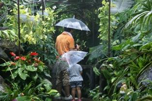 大学生が書く、大温室の大雨スコール体験!_f0203094_173363.jpg