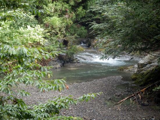渓流釣り_e0048413_17555295.jpg