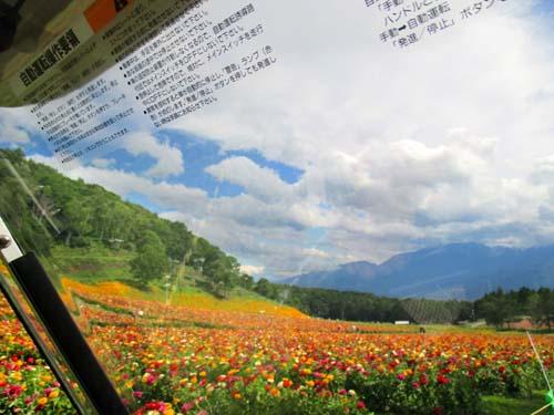 台風娘_d0127634_11271688.jpg