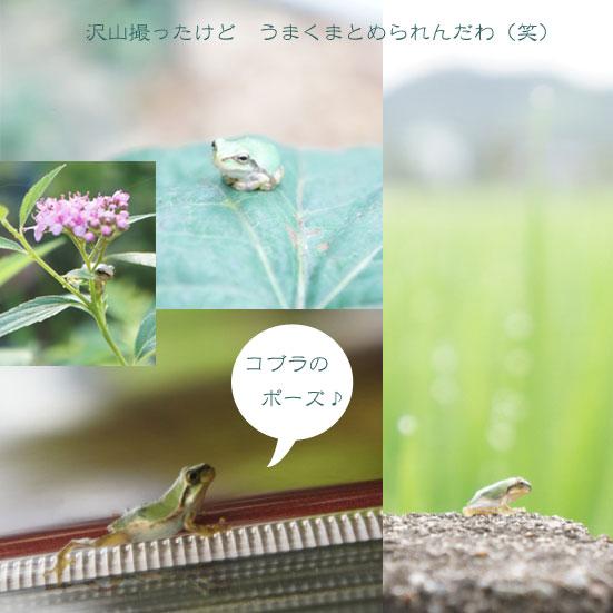 b0008241_163492.jpg