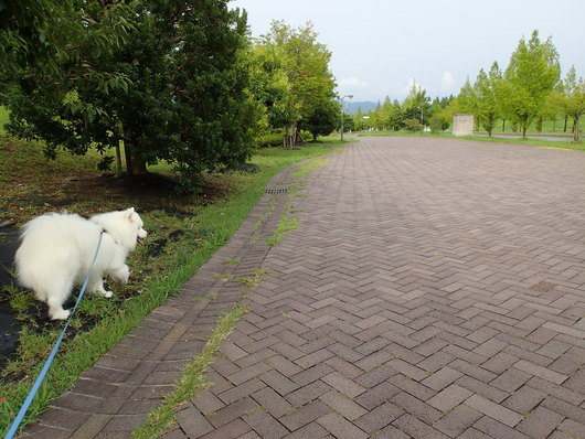 お散歩場所をもとめて_f0128542_0343560.jpg