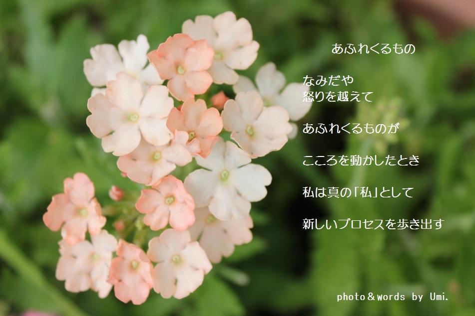 f0351844_16380932.jpg