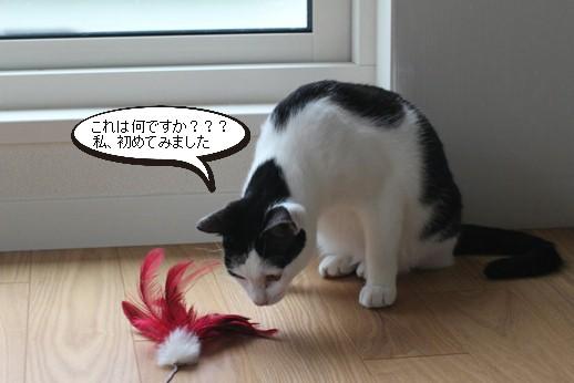 不器用な猫さん_e0151545_22154924.jpg