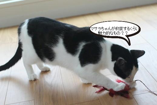 不器用な猫さん_e0151545_22181717.jpg