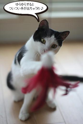 不器用な猫さん_e0151545_2220773.jpg