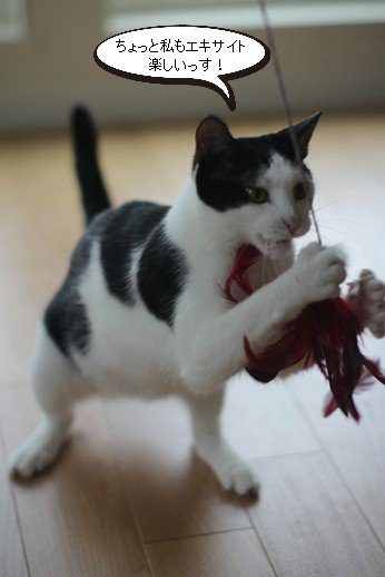 不器用な猫さん_e0151545_22211375.jpg