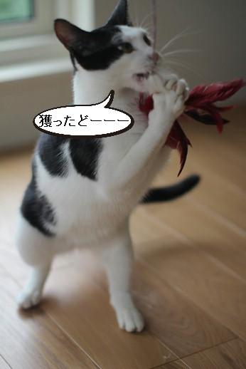 不器用な猫さん_e0151545_22214721.jpg