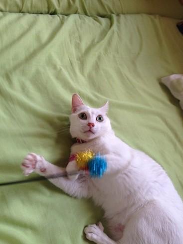 不器用な猫さん_e0151545_2223029.jpg