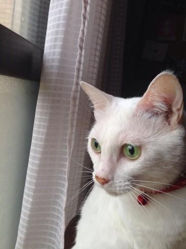 不器用な猫さん_e0151545_22245267.jpg