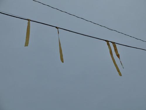 晴れのち雨 5:花束_a0180681_0131963.jpg