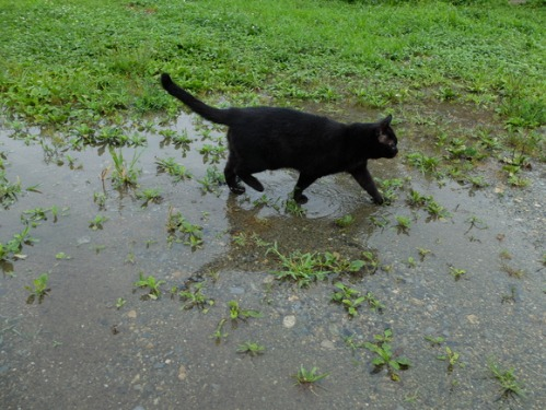 晴れのち雨 4:猫補給_a0180681_21515683.jpg