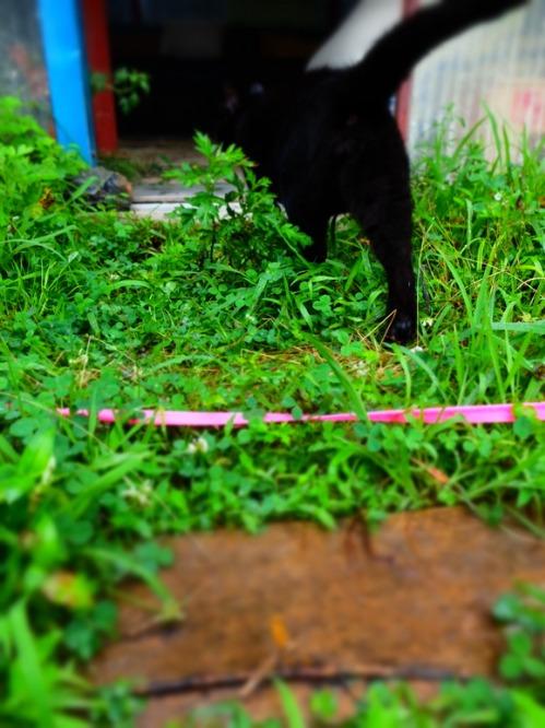 晴れのち雨 4:猫補給_a0180681_21533899.jpg